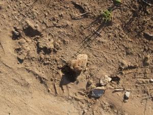 土師器質土器片