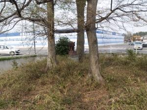 最近の鷲塚古墳の祠